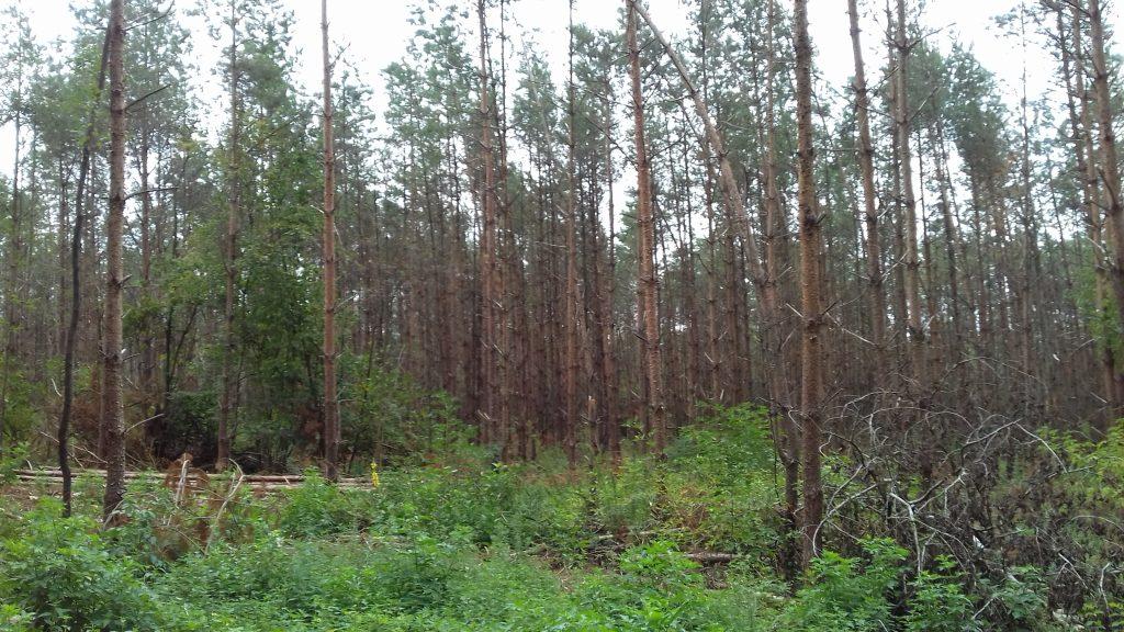 Veteranenlandgoed Vrijland - stormschade - herstel van bos